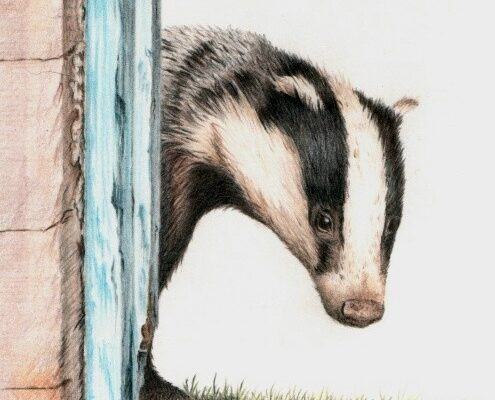green-foundation-ireland-badger-by-blue-door